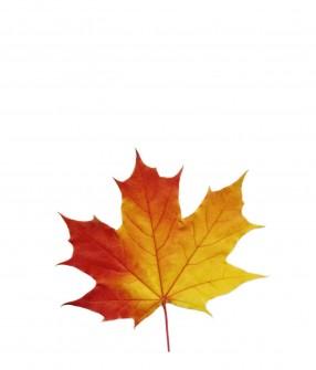 Canadian Leaf (30ml)